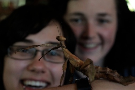 Sarah and Sarah checking out some stick insects
