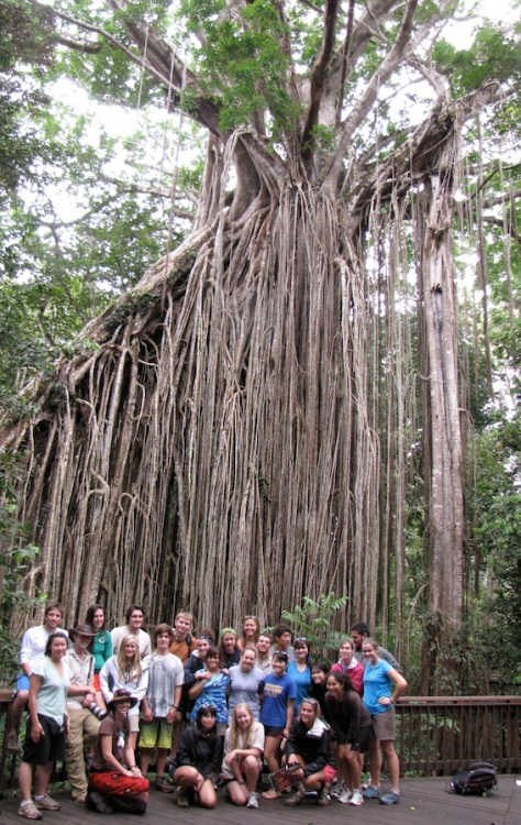 Students learning about the ecology of tropical strangler figs. Claire and Marcus can organaise permits for student day trips into spectacular nearby National Parks such as this one.