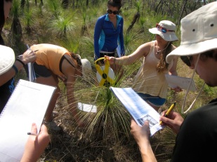 Students studying the ecology of grasstrees