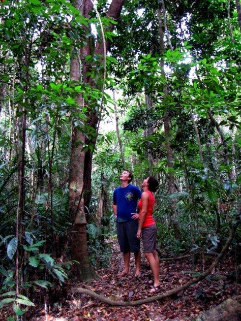 Along a Rainforest trail.