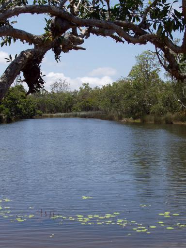 Molloy Lagoon